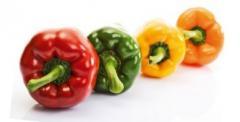 Pepper sweet Italy.