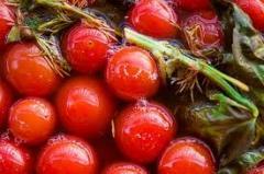 Tomato solon_