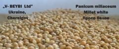 Просо (белое) Panicum miliaceum