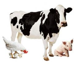 Антибактериальная подсыпка в животноводстве,