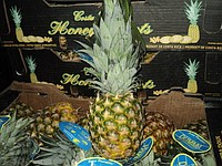 Pineapple (Costa Rica) large and small wholesale