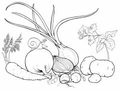 Выращивание овощей, зерновых и технических