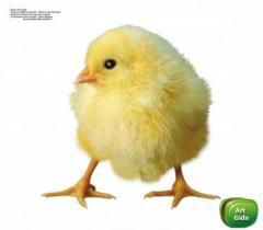 Premix of Vitamit - chicken