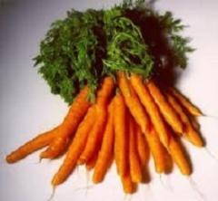 Carrots fresh