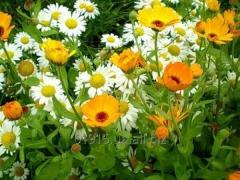 Medicinal, medical plants and raw materials