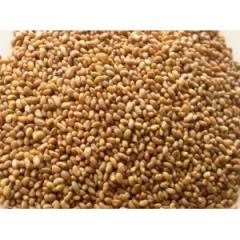 Lucerne seeds party from 100 kg