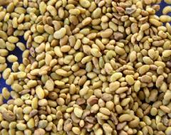 Semillas de la alfalfa, los Cherkassyes (la Partida de 100 kg)