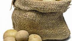 Landing potatoes from Chernihiv