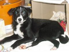 Собачка подросток, 5 месяцев, девочка, метис
