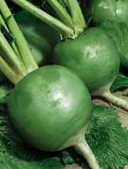 Редька свежая зеленая маргеланская