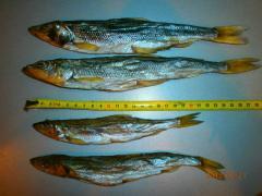 Fish dried smelts ikreny catfish