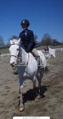 Лошади для выездки