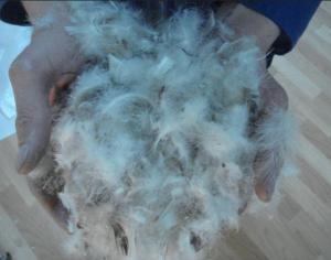 В Курске пуховые одеяла и куртки шьют из украинского пуха