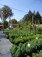 Лиственные и хвоные деревья и кустарники