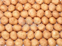 Of potatoes tubers Vinnytsia to buy