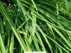 Vinnytsia to buy fungicides, sale