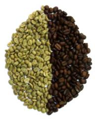 The Robusta coffee in grains fried (Ecuador)