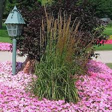 Растения на весну.