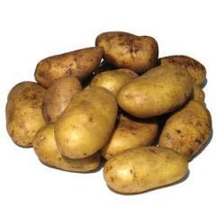 Ривьера ранний картофель картофель на зиму