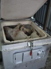 Utilizer of veterinary waste