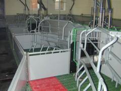 Станковое оборудование для содержания свиней