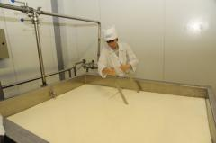 The line for production of white cheeses: the