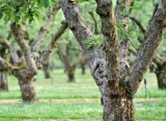 Деревья фруктовые