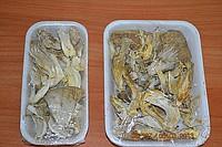Mushrooms dried Oyster mushroom