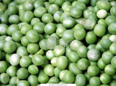 Pea seeds Gotivskij wholesale Ukraine