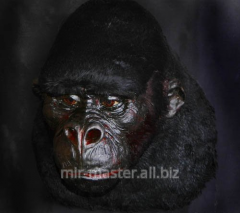 Wax work Gorilla full-scale