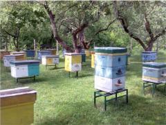 Пчелосемьи в Донецке