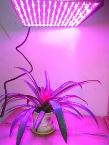 Phyto lamps for growth of plants. Lighting of