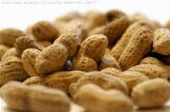 Выявление пищевых аллергенов