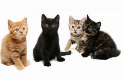 Накопичувачі для котячих туалетів