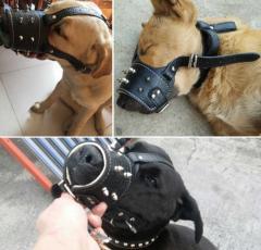 Кожаный намордник для собак рептилия с шипами
