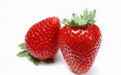Strawberry fresh from the producer