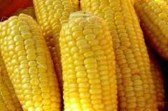 Кукуруза зерно, Зерновые, бобовые и крупяные