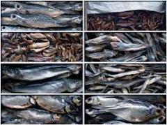 Bull-calf dried, bull-calf salted-dried, carcasses