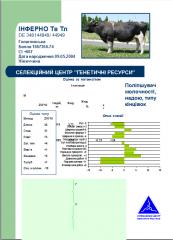 Сперма быков Голштинской породы