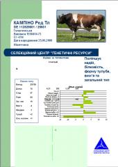 Сперма быков Голштинской красно-пёстрой породы