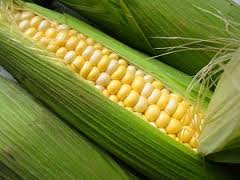 Corn of foreign and domestic selection