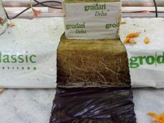 Mineral wool for cultivation of plants of Grodan