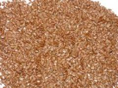 Flax seeds 1 reproduction