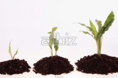 Growth stimulants of plants