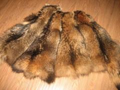 Skin of raccoon