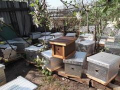 Пчелопакеты - Пчелы
