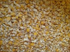 Бита кукурудза