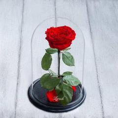 Роза в колбе LUX (закрытый высокий бутон)!