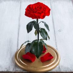 Роза в колбе LUX (раскрытый высокий бутон)!