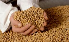 I sell soy wholesale
